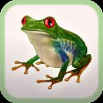 Frog Minutes Box